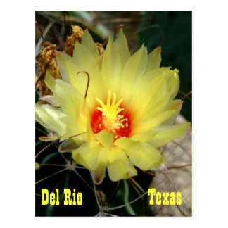 Yellow fishhook cactus flower postcard