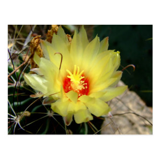 Yellow fishhook cactus flower postcard