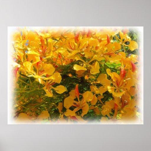 Yellow Flamboyan Amarillo Poster