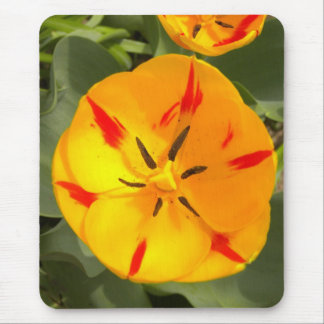 Yellow flamed red tulip mouse pad