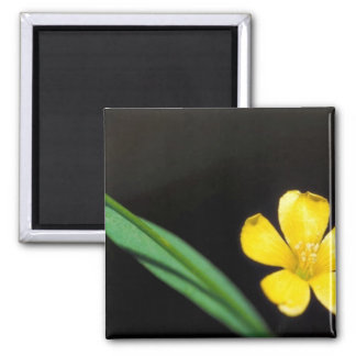 Yellow Flax 2 Inch Square Magnet