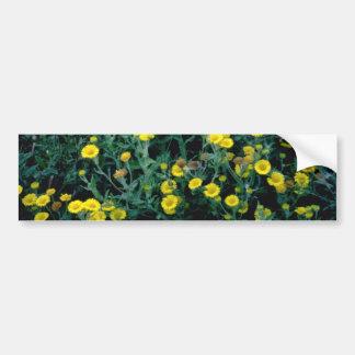 yellow Fleabane flowers Bumper Stickers