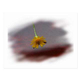 Yellow Florida wildflower on red bass body Postcard