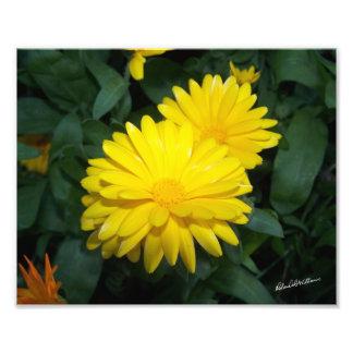 Yellow Flower #2200 Photo Print