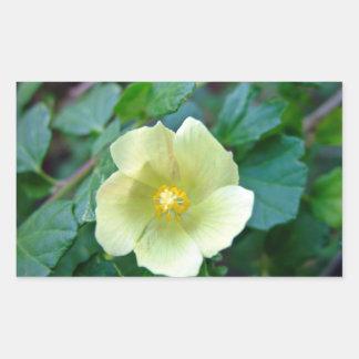 Yellow flower against dark green leaves rectangular sticker