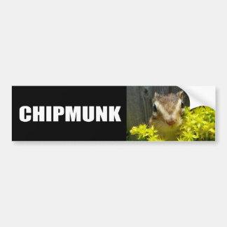 Yellow flower and Chipmunk (1) Bumper Sticker