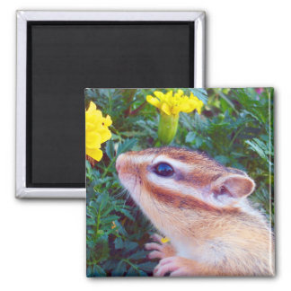 Yellow flower and Chipmunk (2) 2 Inch Square Magnet