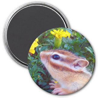 Yellow flower and Chipmunk (2) 3 Inch Round Magnet