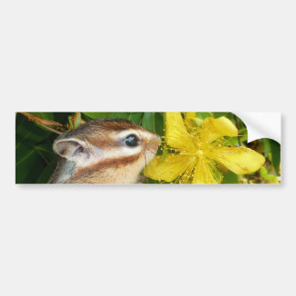 Yellow flower and Chipmunk (4) Bumper Stickers