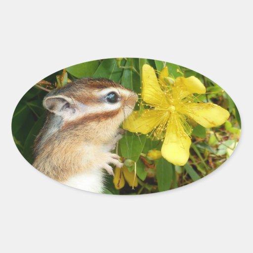 Yellow flower and Chipmunk (4) Oval Sticker