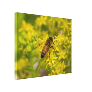 Yellow Flower and Honey Bee Maleny 2016 Canvas Print
