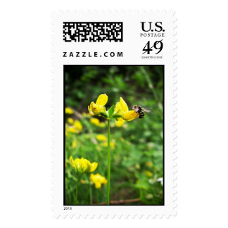 Yellow Flower and Wasp close up macro shoot photo Stamp