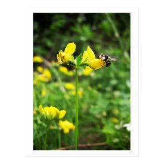 Yellow Flower and Wasp close up macro shoot photo Postcard