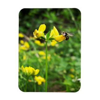 Yellow Flower and Wasp close up macro shoot photo Rectangular Photo Magnet