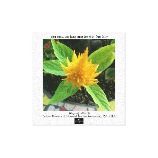 Yellow Flower At Universal Studios 3D Gallery Wrap Canvas