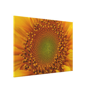 Yellow Flower Beauty Canvas Print