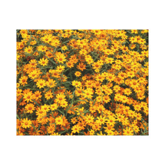 Yellow Flower bed Canvas Print