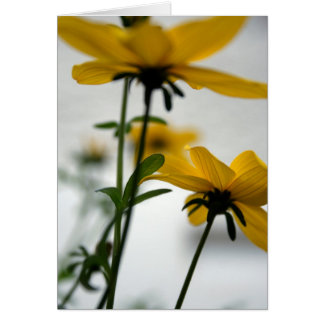 Yellow Flower - Bidens - Don't turn away Card