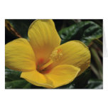 Yellow Flower Card