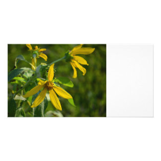 yellow flower daisy style green back image photo cards