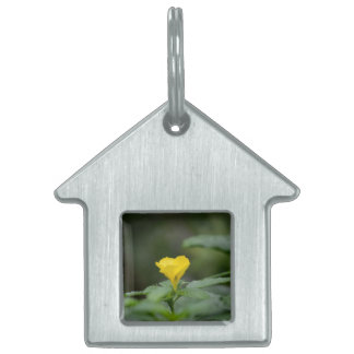yellow flower face up green leaves pet tag