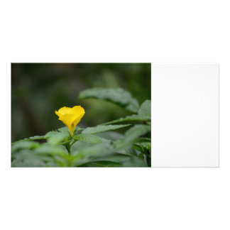 yellow flower face up green leaves photo greeting card