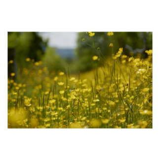 Yellow Flower Field Poster