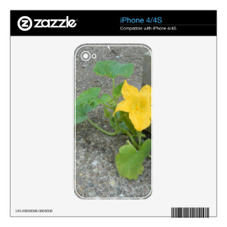 Yellow Flower Grows In Concrete iPhone 4 Skins