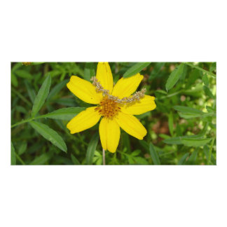 Yellow Flower In the Grass Card
