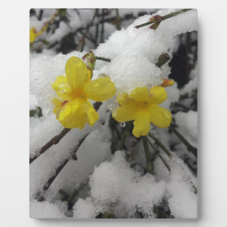 Yellow flower in the snow plaque