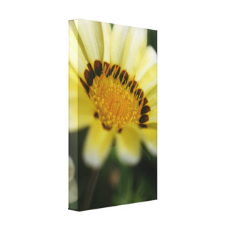 Yellow flower macro photograph on canvas print