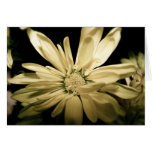 Yellow Flower Notecard - Blank Inside Greeting Cards