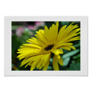 Yellow Flower on a Sunny Day Framable Poster