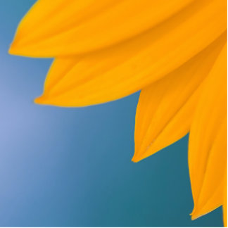 Yellow Flower on Blue background Standing Photo Sculpture