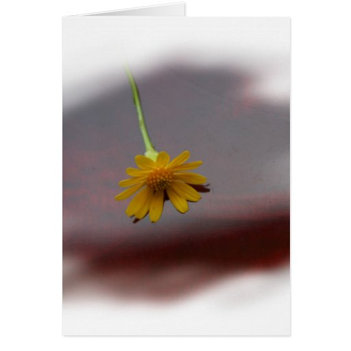 Yellow flower on red background photograph greeting card