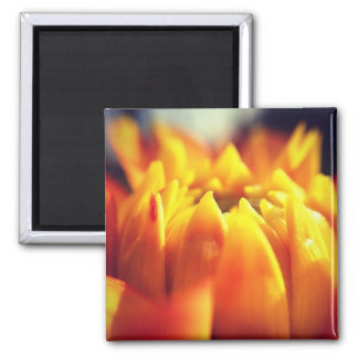 Yellow flower photography 2 inch square magnet