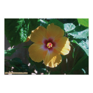 yellow flower posters