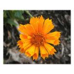 Yellow Flower Print Art Photo
