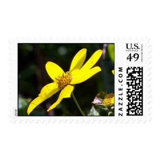 Yellow Flower Soaking up the Sun Postage