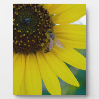 Yellow Flower with Bee Plaque
