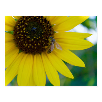 Yellow Flower with Bee Postcard
