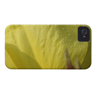 yellow flower with dew Case-Mate iPhone 4 case