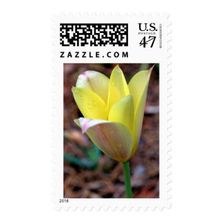 Yellow Flower with Dew Drops Stamp