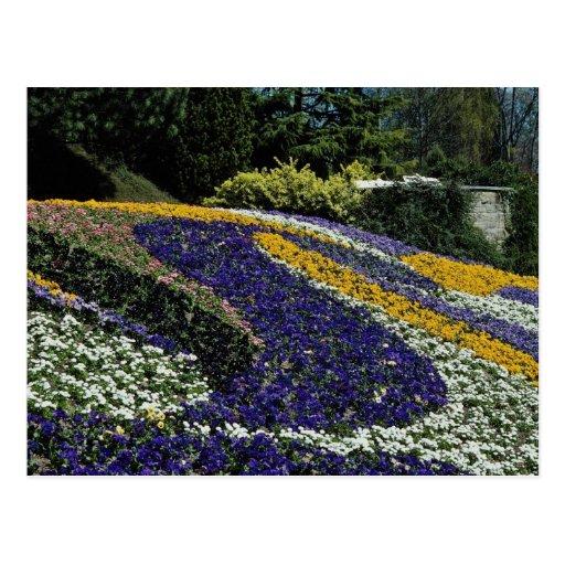 Yellow Flowerbed, Mainau, Germany flowers Postcard