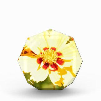 Yellow Flowers Award