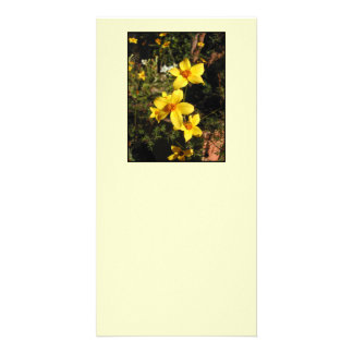 Yellow Flowers. Bidens. On Cream. Card