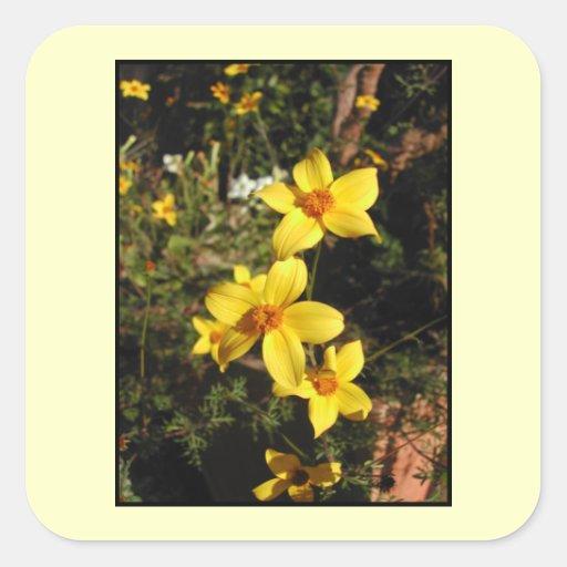 Yellow Flowers. Bidens. On Cream. Sticker