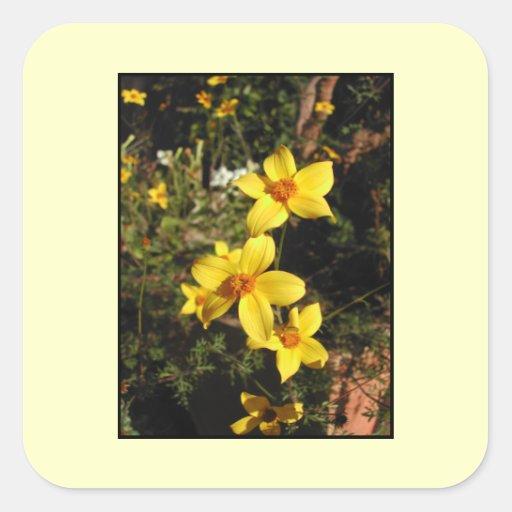 Yellow Flowers. Bidens. On Cream. Square Sticker