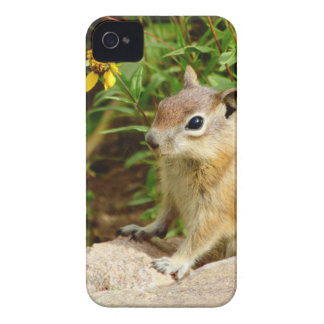 Yellow Flowers Chipmunk iPhone 4 Covers