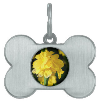 yellow flowers close up floral nature picture pet tag